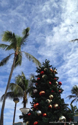 Christmas Tree Palm Tree Hawaii