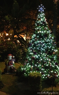 Christmas Tree Lit Up Honolulu