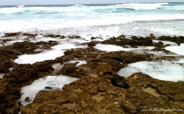 Kaena Point Hawaii Tide Pools