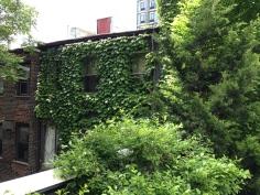 Greenery on NYC's Highline