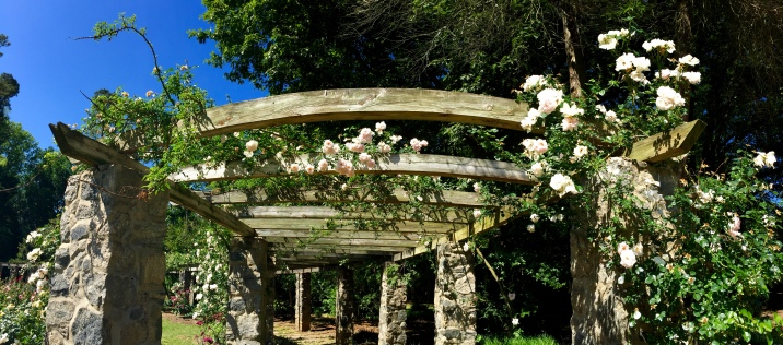 A large rose arbor in the gardens.