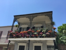 And many houses had beautiful hanging gardens covering their balconies.